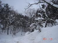 20110129_015